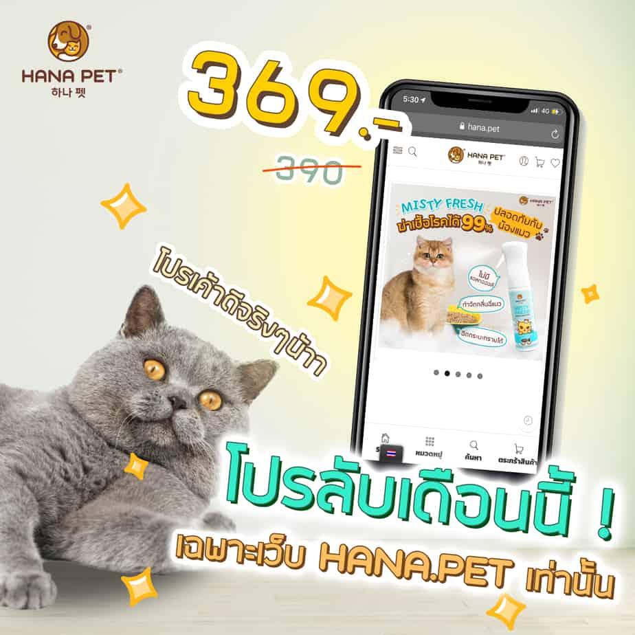 website (Cat)